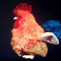Pecking Rooster (Baby Mozart)