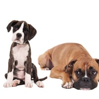dog breeds Top 10 Lists At The Top Ten