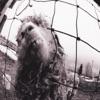 Glorified G - Pearl Jam