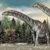 Argentinosaurus (Largest Land Animal)